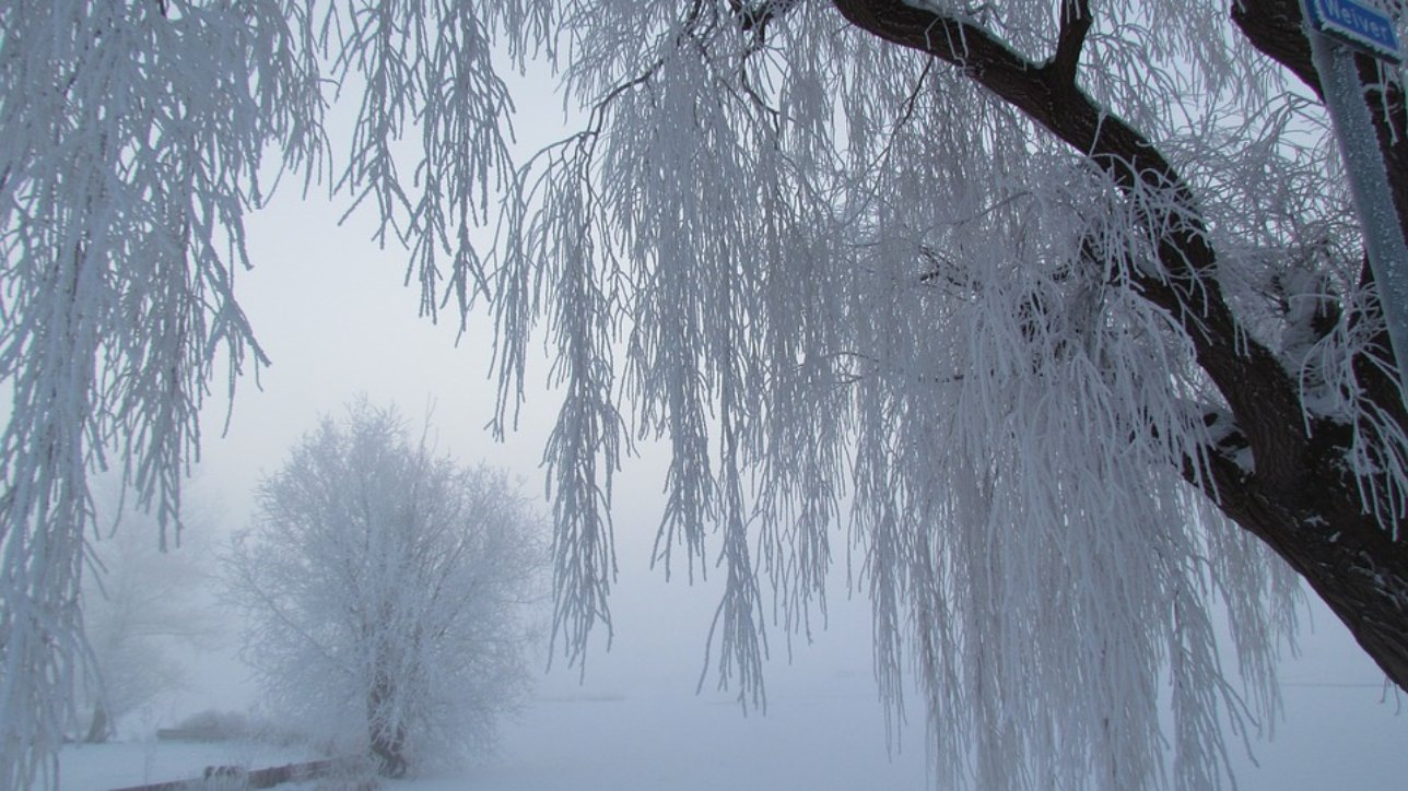 Snowy Freeze Ice Frozen Cold Winter Snow Fog