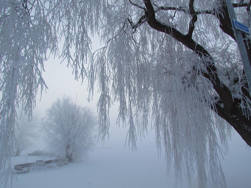 afonía frío ronquera cantar
